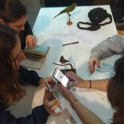Taller d'identificació d'espècies al Museu de Ciències Naturals